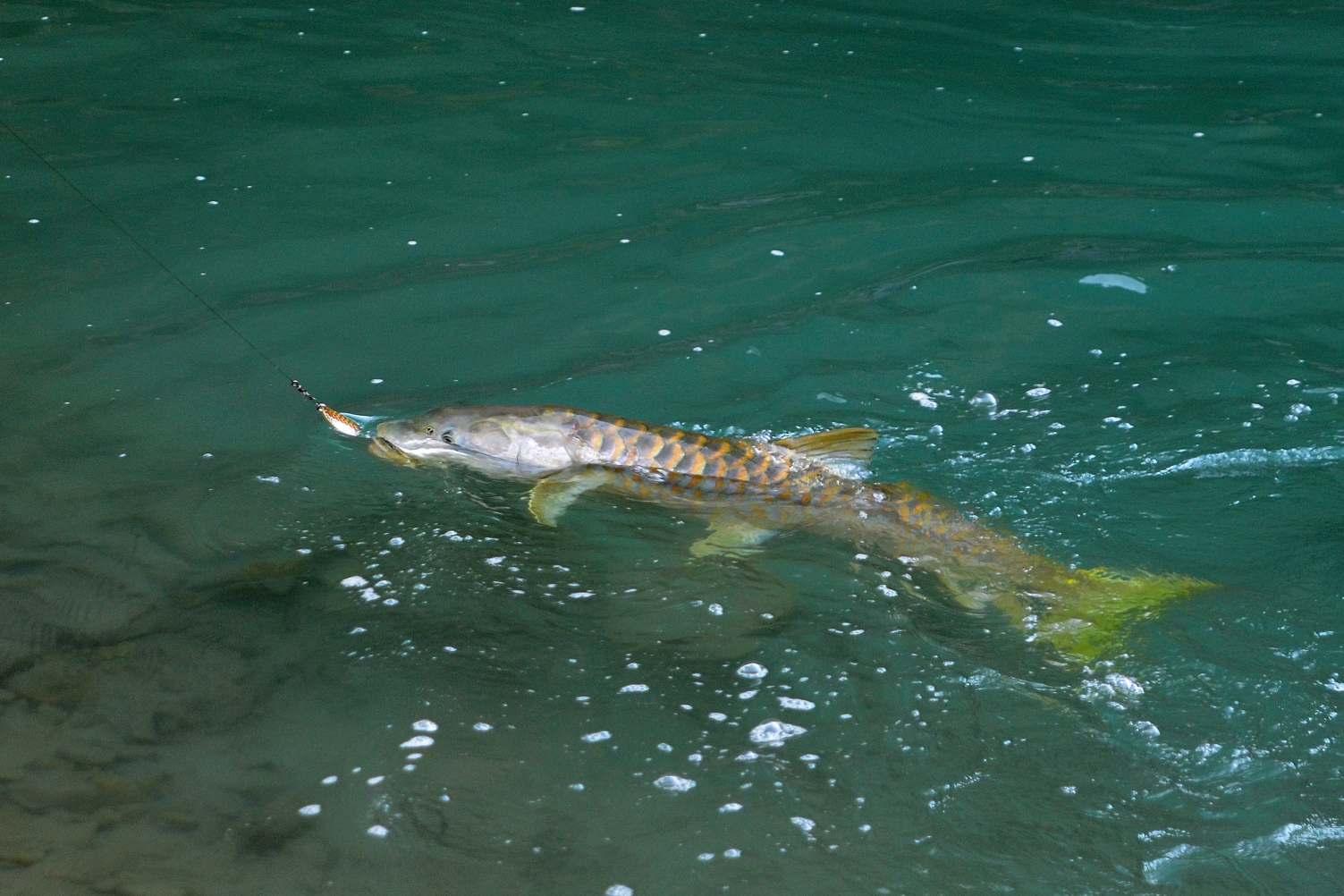 Phewa Lake Fishing